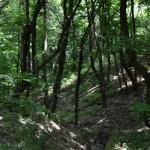 Fond Forestier